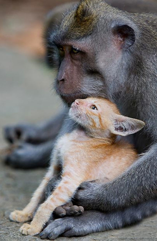 kitten and monkey