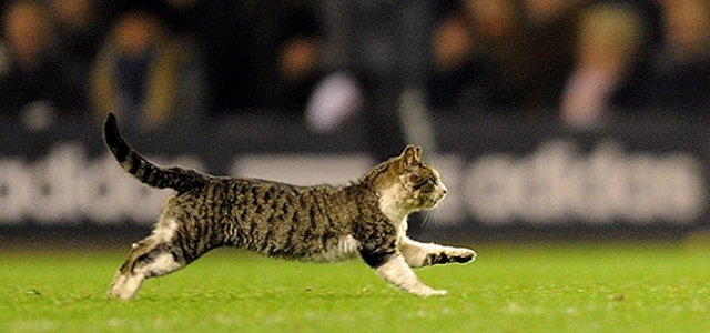 Кот на стадионе
