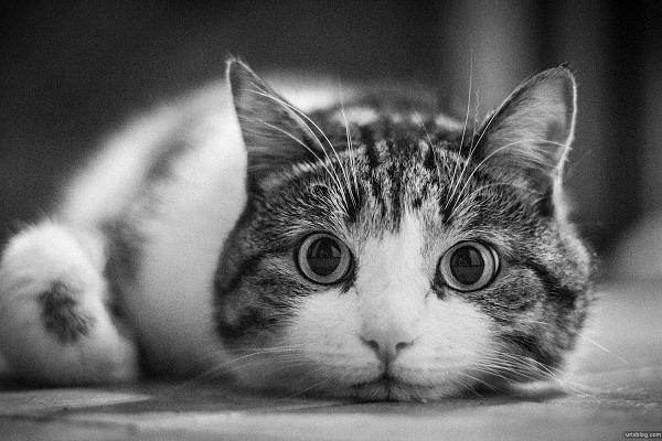 кот смотрит на тебя как