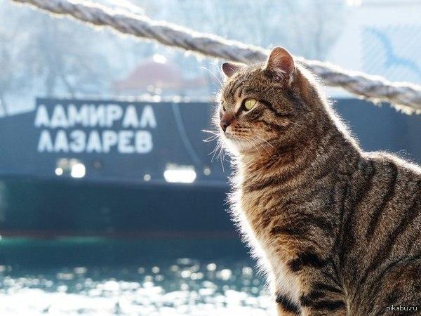 Кот из Севастополя