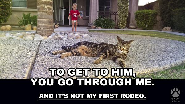 Смелая кошка Тара