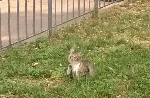 Кот в Клину