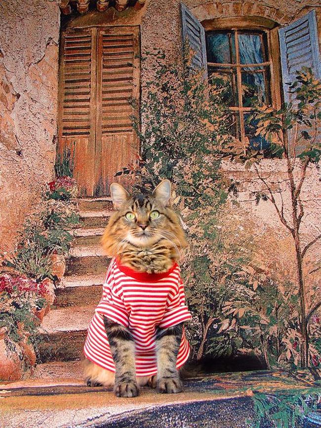 Кот Лоренцо, фотомодель