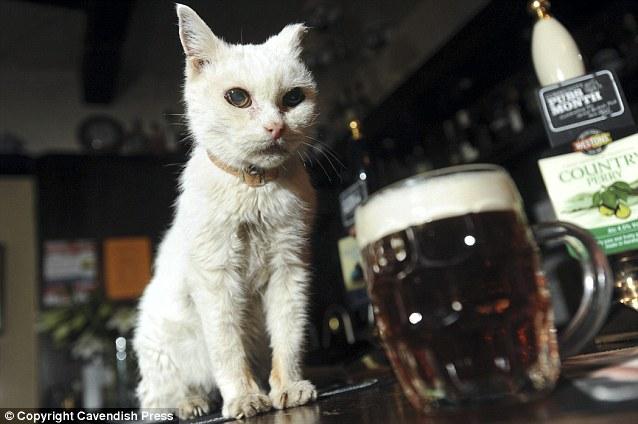 Кошка Рози, 25 лет