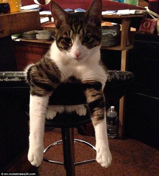 Коты, обитающие в японском кото-баре