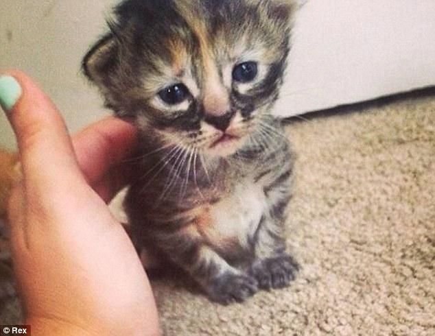 Вечно грустный котенок