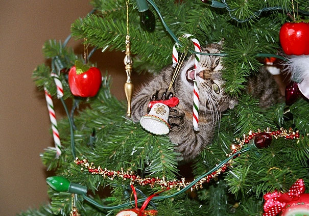14-cats-and-dogs-that-destory-christmas-1