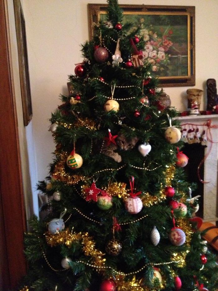 14-cats-and-dogs-that-destory-christmas-13