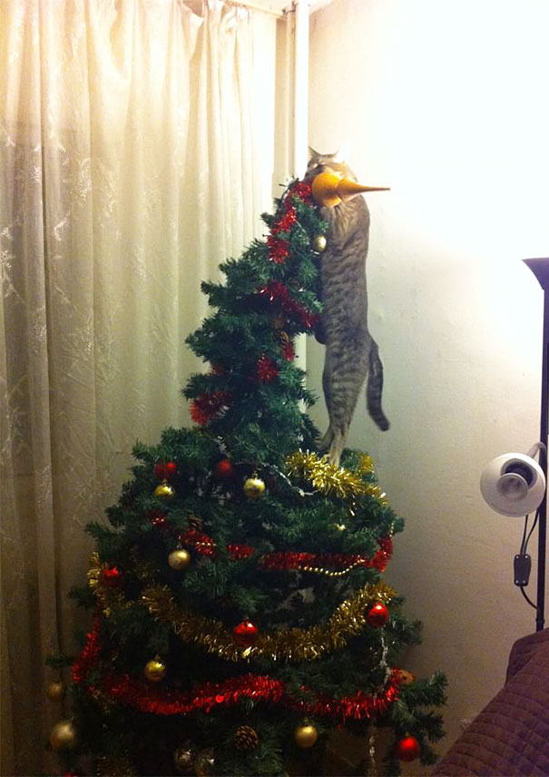14-cats-and-dogs-that-destory-christmas-14