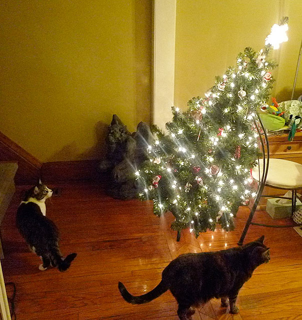 14-cats-and-dogs-that-destory-christmas-3