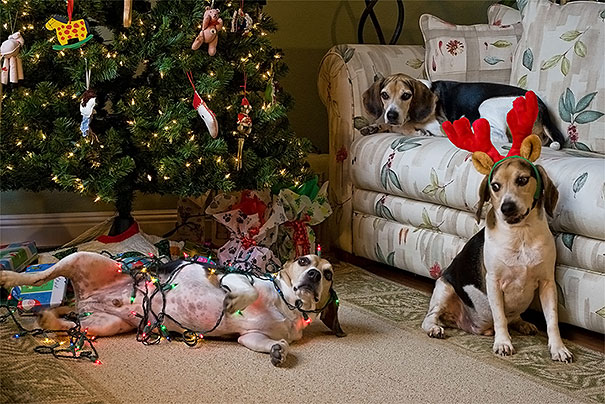 14-cats-and-dogs-that-destory-christmas-4