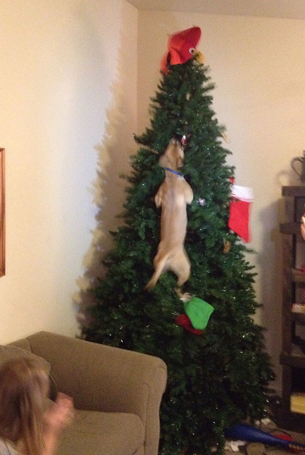 14-cats-and-dogs-that-destory-christmas-5