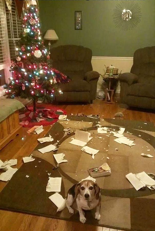 14-cats-and-dogs-that-destory-christmas-6
