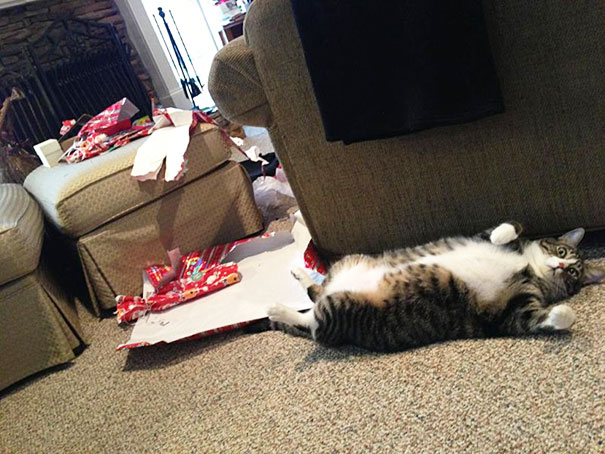 14-cats-and-dogs-that-destory-christmas-8