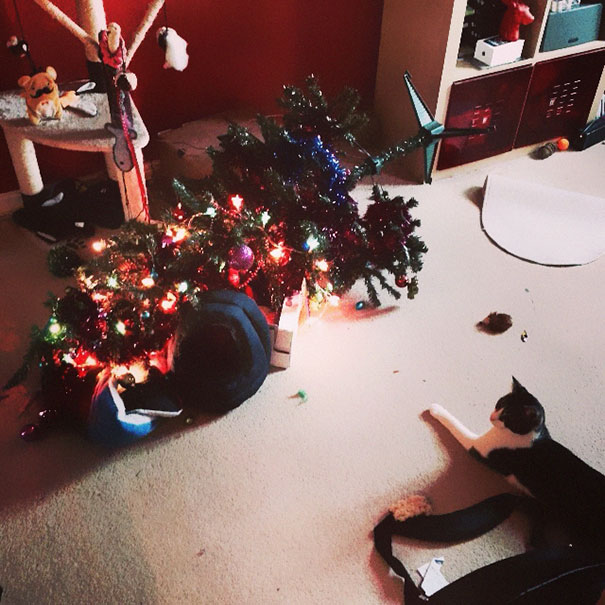 14-cats-and-dogs-that-destory-christmas-9